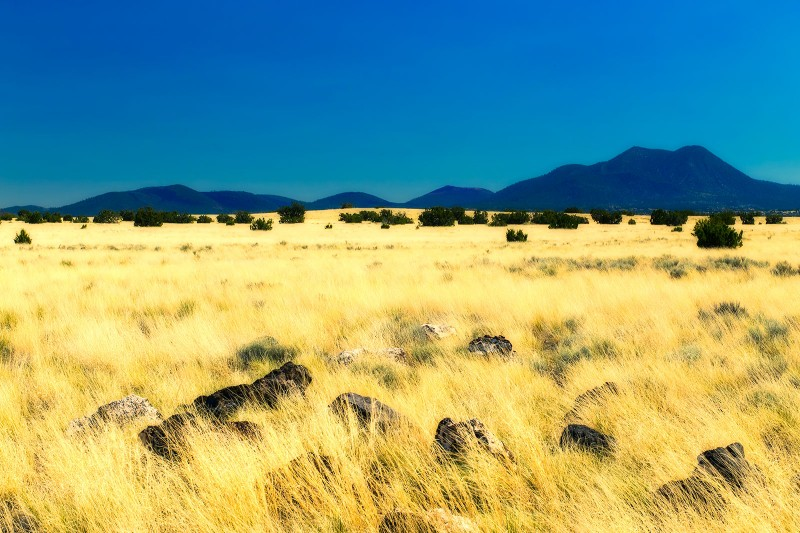 arizona-wupatki-grass