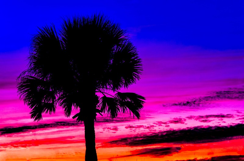 fl-venice-beach-palm-sunset