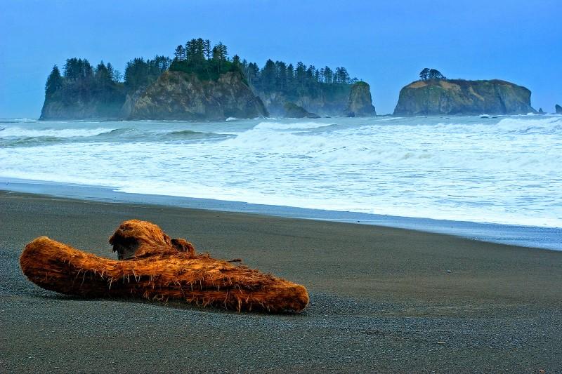 wa-coast-driftwood